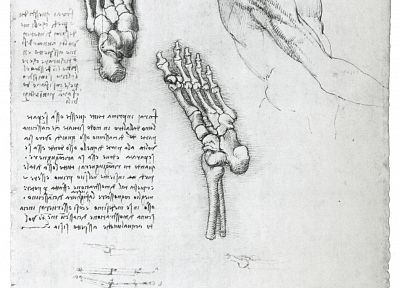 anatomy, Leonardo da Vinci - related desktop wallpaper