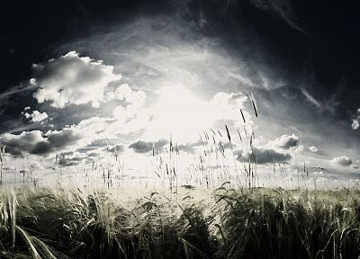 landscapes, wheat, artwork, skyscapes - random desktop wallpaper
