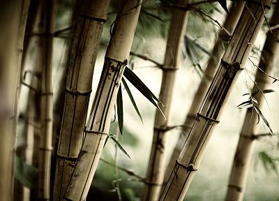 forests, leaves, bamboo, plants - random desktop wallpaper