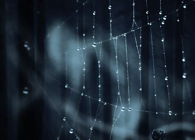 nature, web, water drops, spider webs - desktop wallpaper