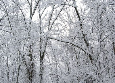 nature, winter, snow, trees, white, forests, seasons - related desktop wallpaper