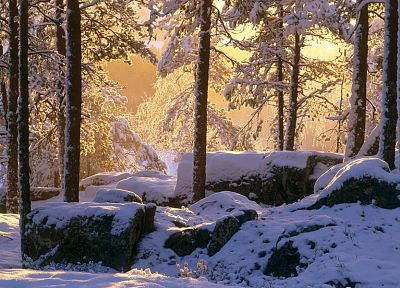 nature, winter, snow, trees, rocks, sunlight - desktop wallpaper