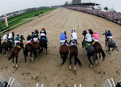 horses, Horse Racing - random desktop wallpaper