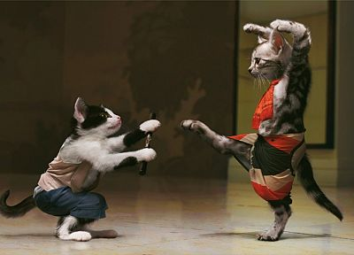 cats, animals, funny, mimi, Kung Fu, funny animals - random desktop wallpaper