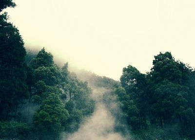 landscapes, trees, forests, mist, roads, rainforest - related desktop wallpaper