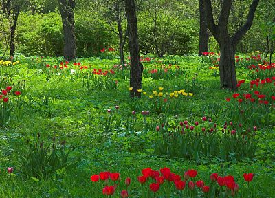 trees, flowers, grass, garden, meadows - desktop wallpaper