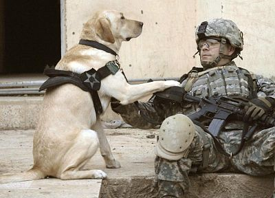 soldiers, army, military, animals, dogs, men - random desktop wallpaper
