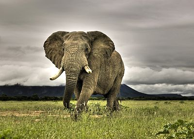 mountains, clouds, nature, animals, grass, South Africa, elephants - random desktop wallpaper