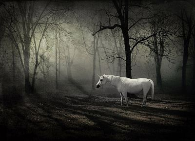 forests, unicorns, fantasy art - random desktop wallpaper