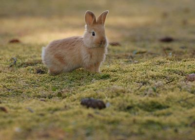animals, rabbits, depth of field - desktop wallpaper