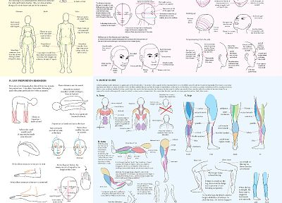 legs, guides, sketches, infographics, drawings, faces - random desktop wallpaper
