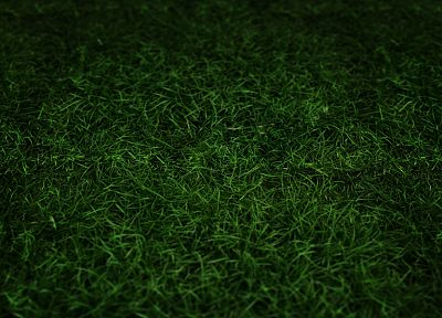green, grass - related desktop wallpaper