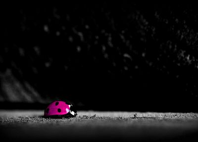 nature, pink, DeviantART, ladybirds - random desktop wallpaper