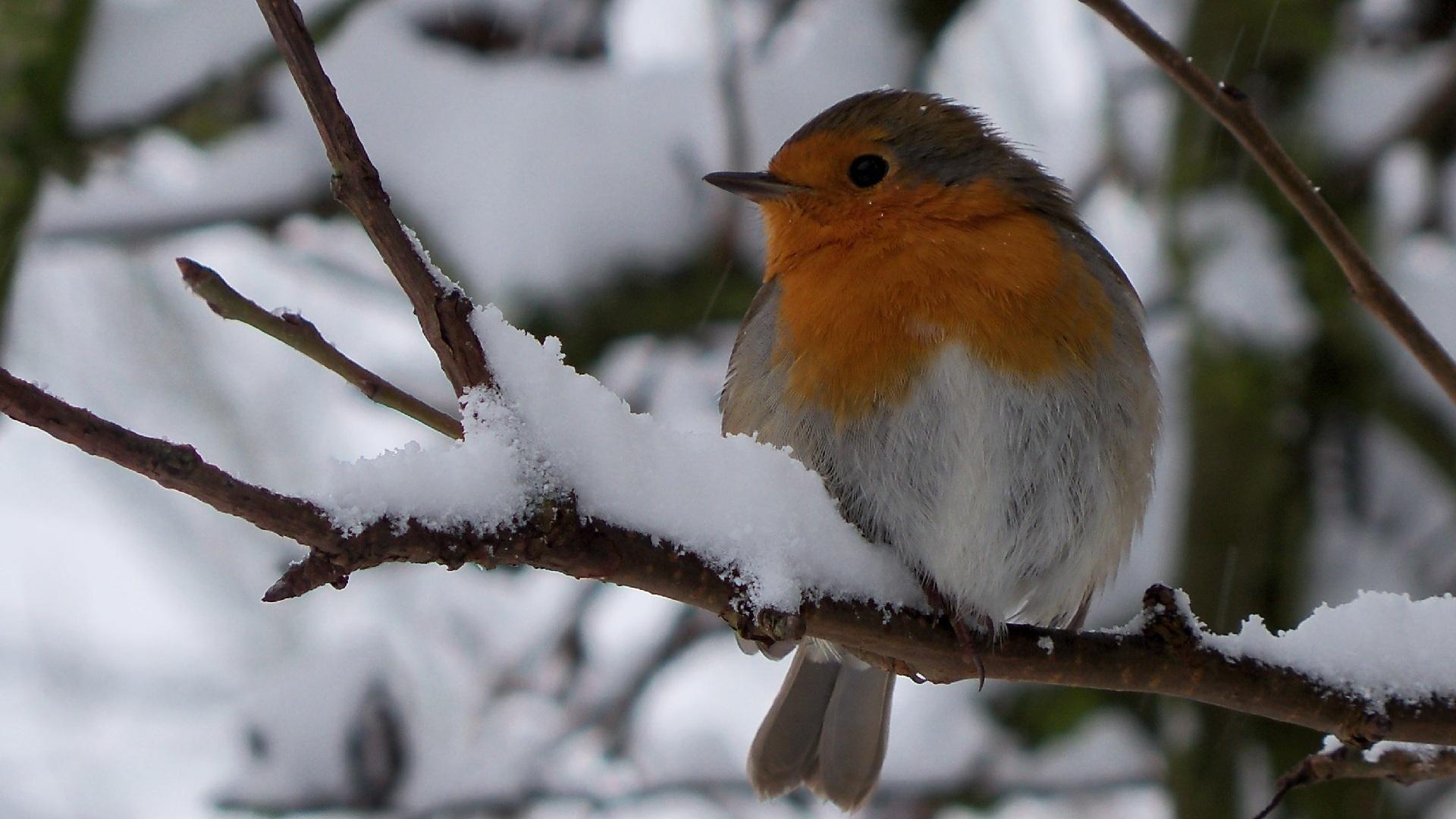 14+ Winter Birds Desktop Wallpaper ...