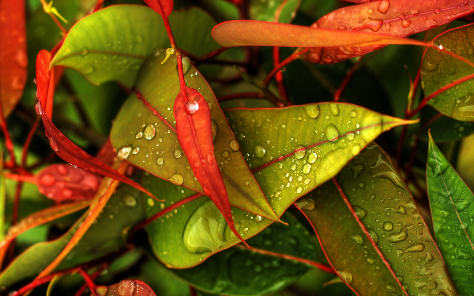 Nature Multicolor Leaves Water Drops