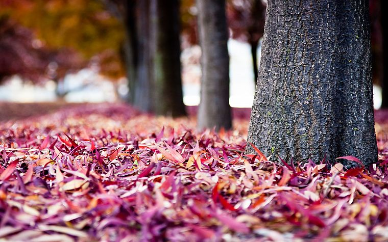 nature, trees, autumn, leaves, depth of field, fallen leaves - desktop wallpaper