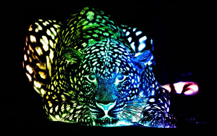 multicolor, leopards, colors - desktop wallpaper