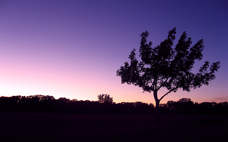 evening, skies, lone tree - desktop wallpaper