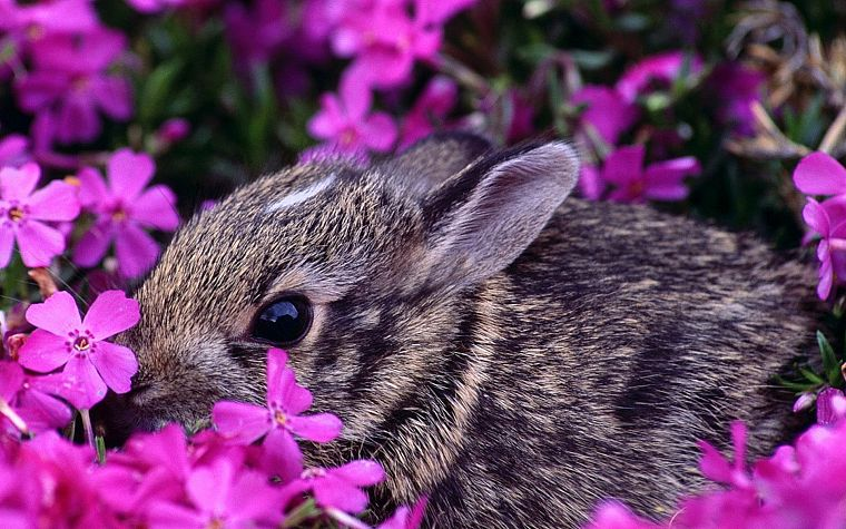 bunnies, flowers, animals, pink flowers - desktop wallpaper