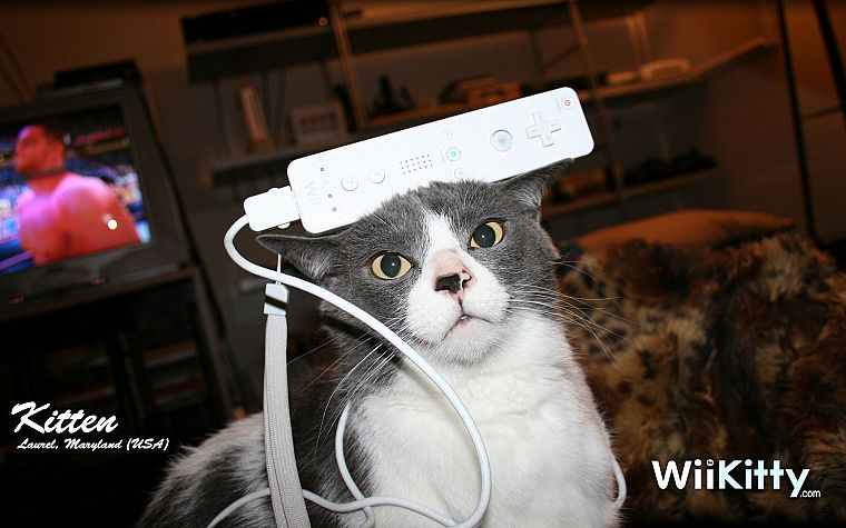 cats, funny, Nintendo Wii, pets - desktop wallpaper