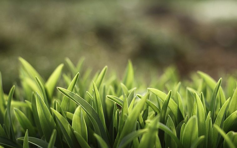 green, nature, grass, macro, depth of field - desktop wallpaper