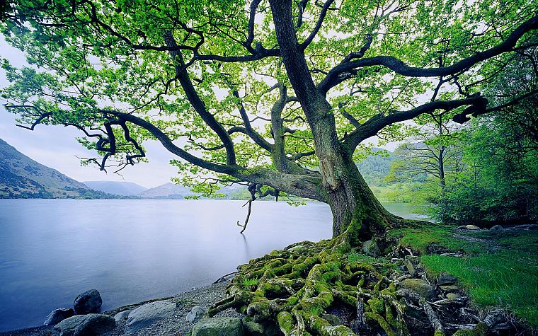 landscapes, nature, trees, old, United Kingdom, lakes - desktop wallpaper