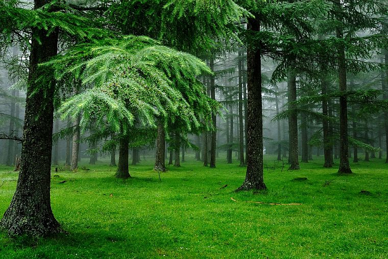 green, trees, forests, grass, outdoors - desktop wallpaper