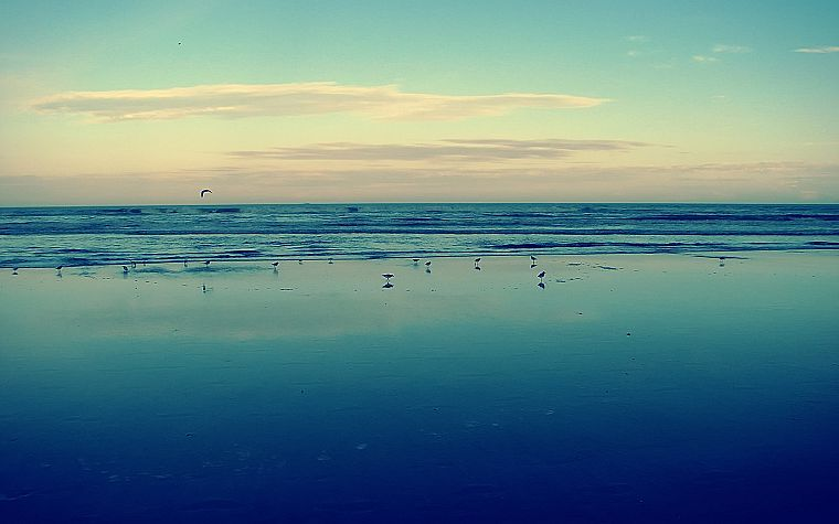 water, ocean, landscapes, seagulls - desktop wallpaper