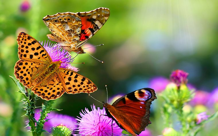 nature, flowers, insects, depth of field, butterflies - desktop wallpaper