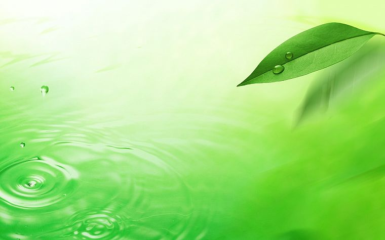 green, water, nature, leaves - desktop wallpaper