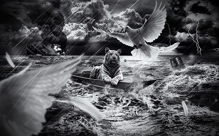 abstract, clouds, birds, tigers, doves, storm, feathers, boats, monochrome, lightning, Desktopography, sea - desktop wallpaper