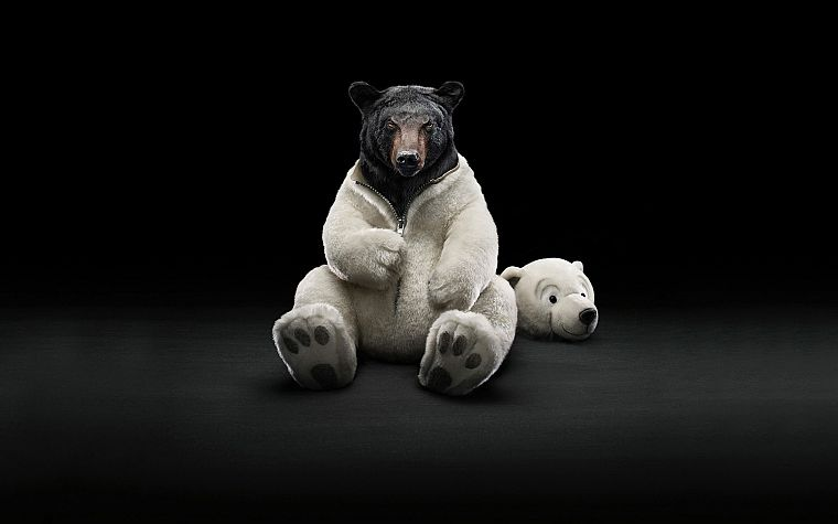 costume, animals, funny, bears - desktop wallpaper