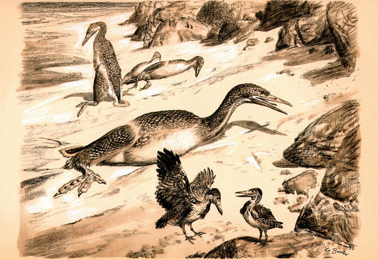 birds, dinosaurs, illustrations, sepia, prehistoric, Zdenek Burian, Hesperornis - desktop wallpaper