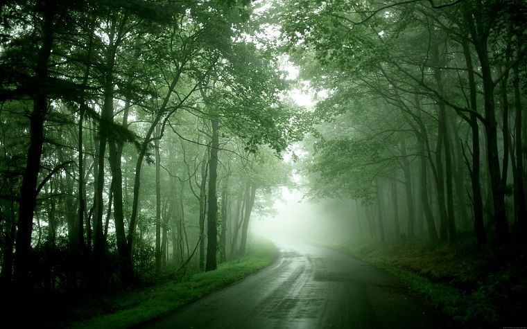 nature, forests, mist, roads - desktop wallpaper