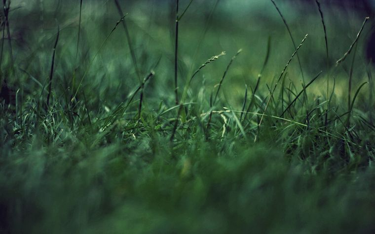 green, grass - desktop wallpaper
