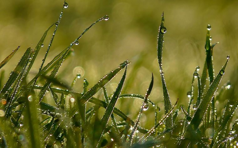 nature, grass, water drops - desktop wallpaper