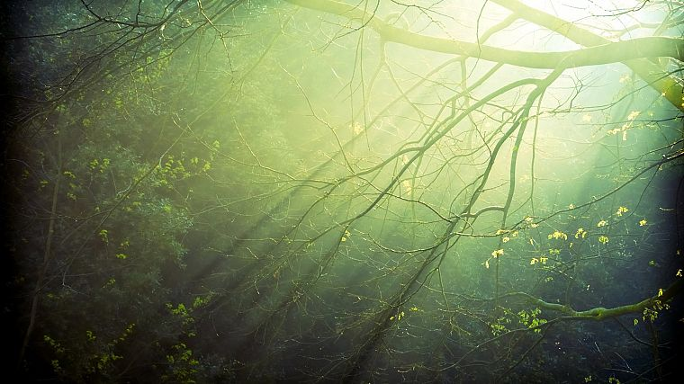 landscapes, nature, trees, forests, shadows, sunlight, branches - desktop wallpaper