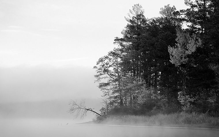 coast, trees, wood, forests, shore, fog, grayscale, monochrome - desktop wallpaper