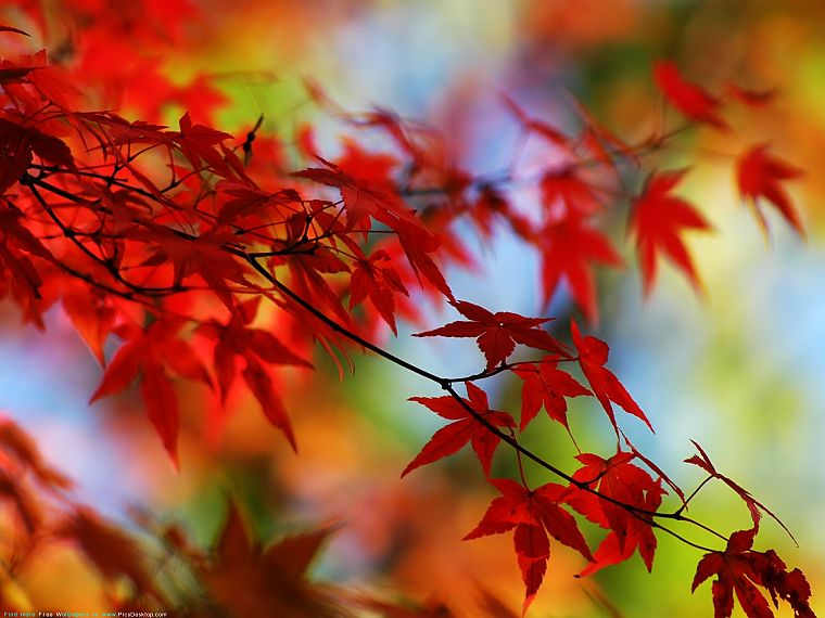autumn, leaves - desktop wallpaper
