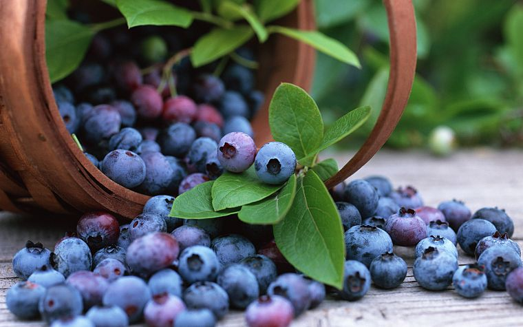 fruits, blueberries - desktop wallpaper