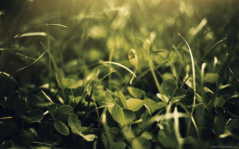 green, nature, leaves, grass, plants, macro - desktop wallpaper