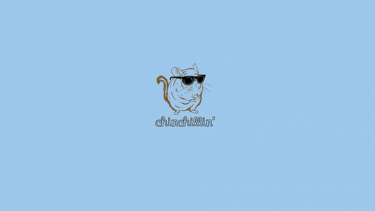 minimalistic, glasses, funny, sunglasses, Chinchilla, blue background - desktop wallpaper