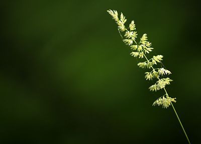 green, nature, grass, wheat, spider webs - related desktop wallpaper