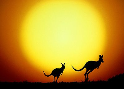 sunset, Sun, yellow, animals, orange, silhouettes, Australia, kangaroos - random desktop wallpaper