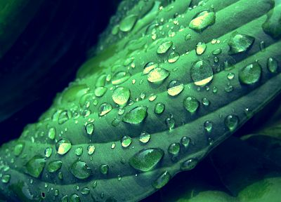 green, nature, plants, water drops, macro, dew - random desktop wallpaper