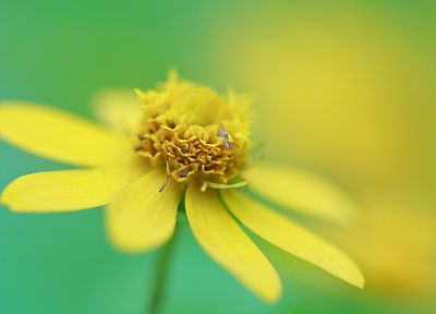 nature, flowers, macro, depth of field, yellow flowers - random desktop wallpaper