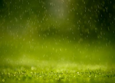 rain, grass - random desktop wallpaper