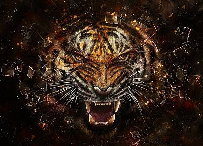 animals, tigers, revenge - random desktop wallpaper