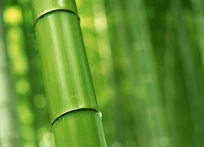 bamboo - desktop wallpaper