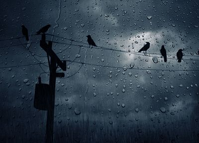 birds, power lines, condensation - desktop wallpaper